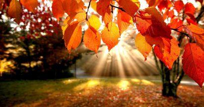 5 consejos saludables para el otoño