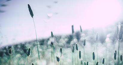 Consejos para combatir la alergia al polen