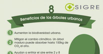 8 beneficios de los árboles urbanos